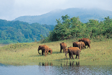 Elefanten im Periyar-Wildlife-Sanctuary